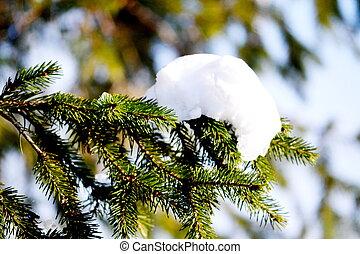 Branch fir-tree in snow