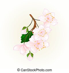 Branch flowers wild Cherry natural background vintage vector.eps