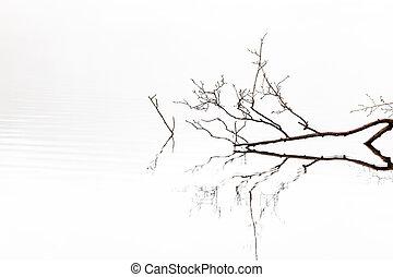 branch froggy