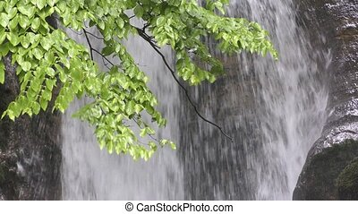 Branch in front of waterfall - Fresh green hardwood leaves...