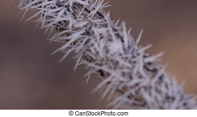 Branch in Hoarfrost - hoarfrost on a branch macro