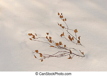 Branch in the snow 4