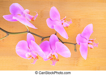 branch lilac  orchid on bamboo wooden  background