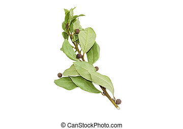 Branch of a bay laurel and several peas allspice - Branch...