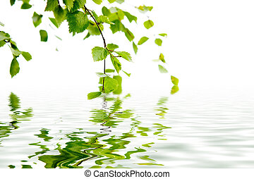 Branch of a birch and reflexion in water - Branch of a birch...