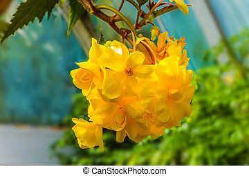 Magnificent yellow-orange flowers