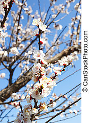 branch of a blossoming tree against the blue sky