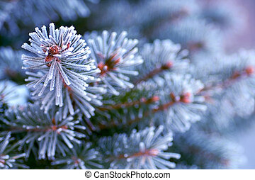 branch of a Christmas tree in the snow close-up