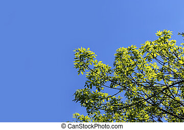 Branch of a green tree in the blue sky