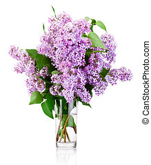 Branch of a lilac in glass vase isolated on white background