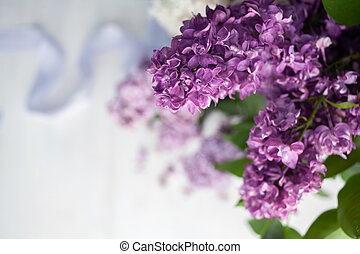 Branch of a lilac isolated on white background