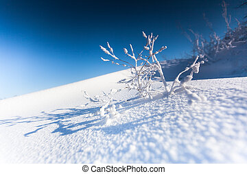 Branch of a plant covered with snow