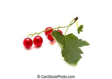Branch of a red currant with leaves on a white background