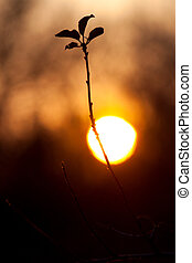 Branch of a tree against of the setting sun - Branch of a...