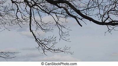 branch of a tree against the sky