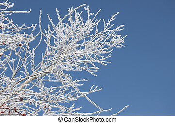 Branch of a tree in hoarfrost on a background of blue sky