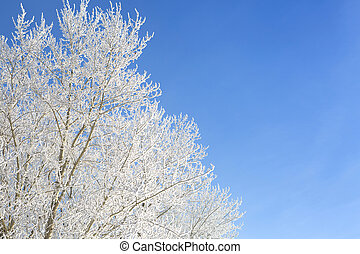 Branch of a tree in hoarfrost on background blue sky