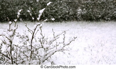 Branch of a tree in hoarfrost . - Close Up Detail shot of a...
