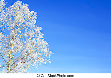 Branch of a tree in snow against the blue sky