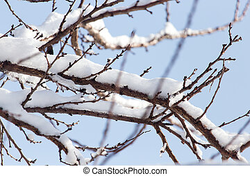 branch of a tree in the snow against the blue sky