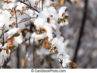 branch of a tree in the snow in the winter