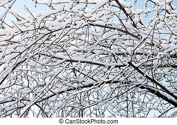 Branch of a tree in the snow