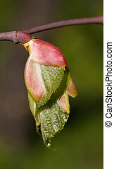 young leaves - Branch of a tree with young leaves in the ...