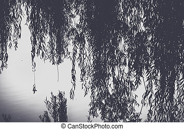 Branch of a willow bent over the water surface of the pond.