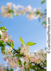 Branch of an apple tree against a blue sky