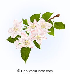 Branch of apple tree with flowers spring background vintage vector.eps