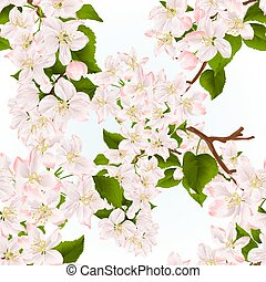 Branch of apple tree with flowers vector.eps