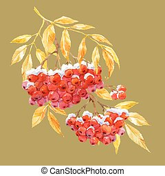 Branch of ashberry - Beautiful image with watercolor hand...
