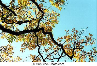 Branch of autumn oak tree