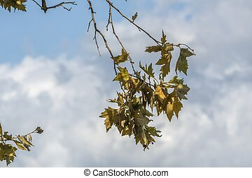 branch of autumnal tree