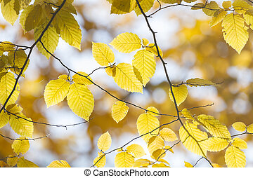 Branch of beautiful autumn leaves