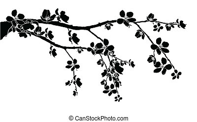 Branch of beautiful cherry blossom - Black branch of...