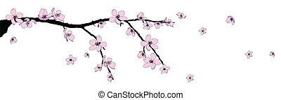 Branch of beautiful cherry blossom