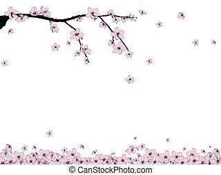 Branch of beautiful seasonal pink cherry blossom
