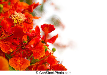 Branch of beautiful orange flower isolated on white background