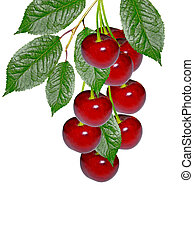 branch of berries cherries with leaves isolated on white background