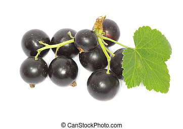branch of black currant fruits isolated on white background