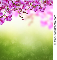 Branch of blooming orchid flowers
