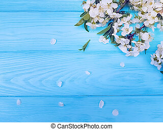 Branch of blossoming cherry on a blue wooden background