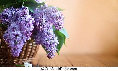 branch of blossoming spring lilac on a orange background