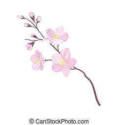 Branch of Cherry Blossom with Tender Pink Flowers Vector Illustration