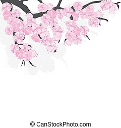Branch of cherry blossoms with sakura flowers