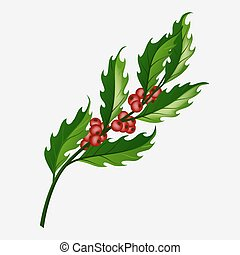 Branch of Christmas holly berry isolated