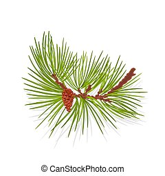 tree mountain Pine branch - Branch of Christmas tree...
