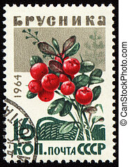 Branch of cowberry on post stamp