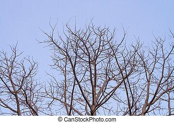 Branch of dead tree on sky
